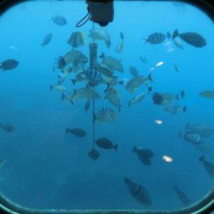 魚眼海洋公園晚餐秀(海底展望台付)
