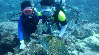 關島浮潛遇見海龜之旅