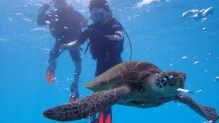 與海龜共游 岸潛+海潛(2次潛水)