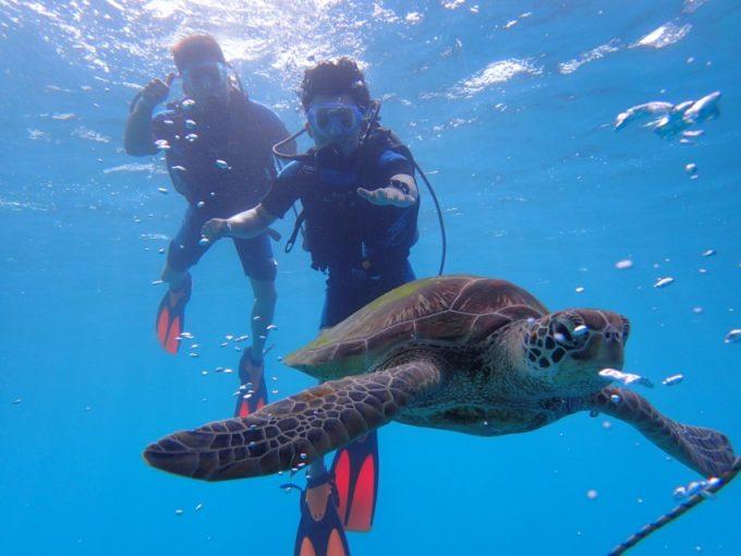 與海龜共游 1淺灘&1出海(2次潛水)