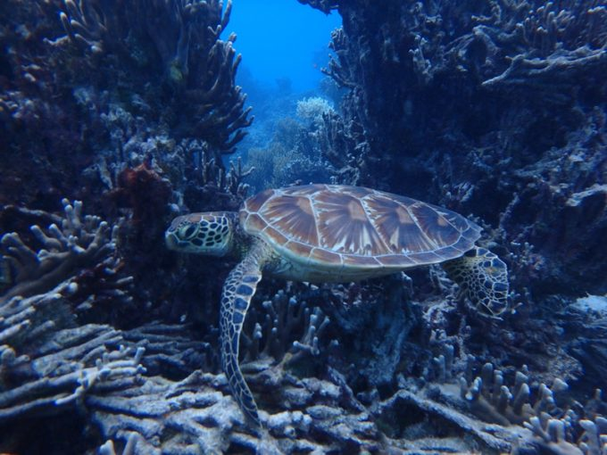 水肺潛水-岸潛+船潛