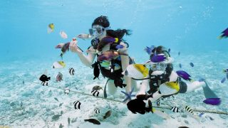 被珊瑚礁包圍的美麗小島!可可斯島渡假村「可可斯島&趣味水肺潛水」